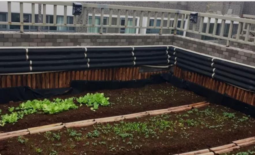 用排水板DIY屋顶花园后的效果拍照,看一下怎么样
